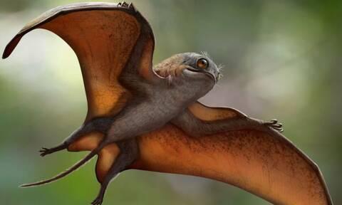Ένας χαριτωμένος πτερόσαυρος: Ασυνήθιστη ανακάλυψη προϊστορικού πλάσματος στην Κίνα