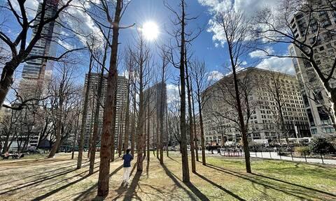 «Δάσος-φάντασμα», μια εγκατάσταση της Maya Lin στο Μανχάταν