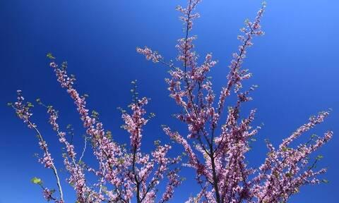 Καιρός Πάσχα - Καλλιάνος: Μεγάλη Εβδομάδα με καλοκαιρινές θερμοκρασίες
