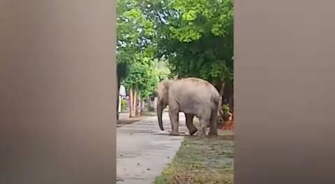 Πριν χτυπήσει το... κουδούνι: Ελέφαντας κάνει «ντου» σε σχολείο και προκαλεί τρόμο! (vid)