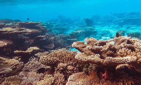 Αυτό το φυτό της θάλασσας χρησιμεύει στη ζωή μας!