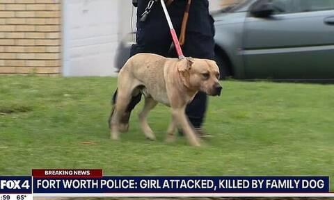 Φρίκη στις ΗΠΑ: Σκύλος κατασπάραξε 4χρονη στο σπίτι της