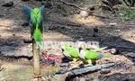 Ρεπορτάζ Newsbomb.gr: Οι παπαγάλοι της Αθήνας - Πώς το κέντρο της πρωτεύουσας γέμισε εξωτικά πουλιά