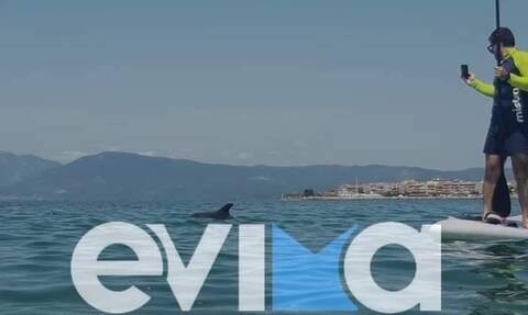 Εύβοια: Δελφίνι βγήκε στα ρηχά σε παραλία της Αρτάκης και «τρέλανε» τους λουόμενους