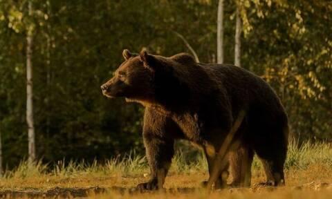 Σάλος: Ο Πρίγκιπας του Λιχτενστάιν σκότωσε τη μεγαλύτερη αρκούδα της Ευρώπης