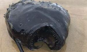 Έπαθαν πλάκα! Ψάρι βγαλμένο από… ταινία τρόμου ξεβράστηκε σε ακτή (pics+vid)