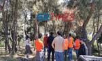 Θεσσαλονίκη: Τα αγριογούρουνα πήραν… φόρα - Κινητοποίηση των Αρχών στο Άλσος Συκεών