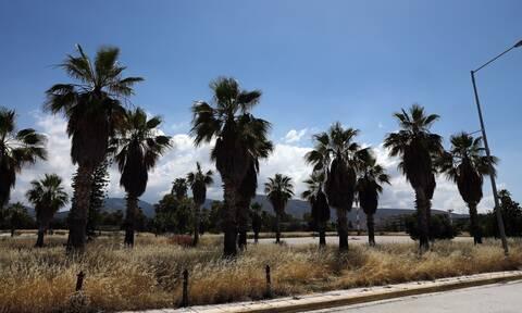 Το ΣτΕ έδωσε το «πράσινο φως» για έργα στο Μητροπολιτικό Πάρκο του Ελληνικού