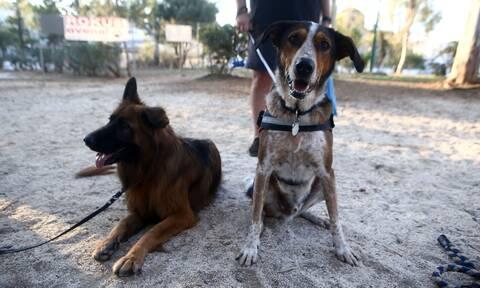 Κάτοικοι της Νέας Σμύρνης ζητούν από το ΣτΕ την κατάργηση του πάρκου σκύλων