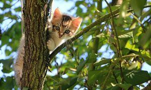 Κτηνωδία στη Μυτιλήνη: Σκότωσε γατάκι και... καμάρωνε στα social media