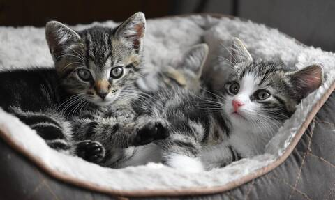 Τα μεγαλύτερα φιλοζωικά σωματεία της χώρας στηρίζουν το νομοσχέδιο για τα ζώα συντροφιάς