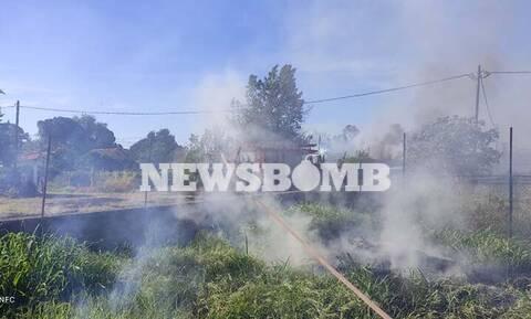 Φθιώτιδα: Συναγερμός για φωτιά στην παραλία Τραγάνας - Στις αυλές των σπιτιών οι φλόγες