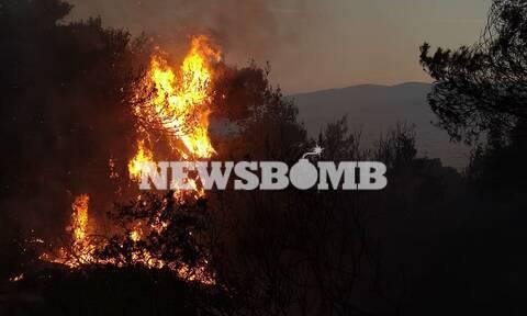 Φωτιά στην Κορινθία: Ανεξελέγκτο το μέτωπο - Εκκενώθηκαν οικισμοί, κάηκαν σπίτια