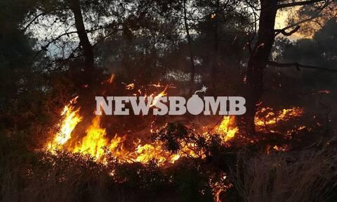 Φωτιά στο Σχίνο: Εκτός ελέγχου το πύρινο μέτωπο - Ενισχύονται οι πυροσβεστικές δυνάμεις