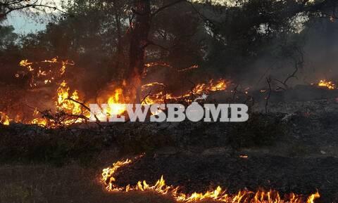 Φωτιά στην Κορινθία: Καίγεται παρθένο δάσος – Εκκενώθηκαν το Αλεποχώρι, 6 οικισμοί και δύο μονές