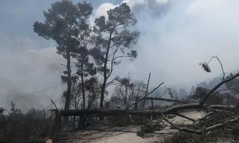 Φωτιά ΤΩΡΑ: Δραματικές στιγμές στα Μέγαρα! Παντού καπνός και στάχτη -Καταβρέχουν αυλές και μπαλκόνια