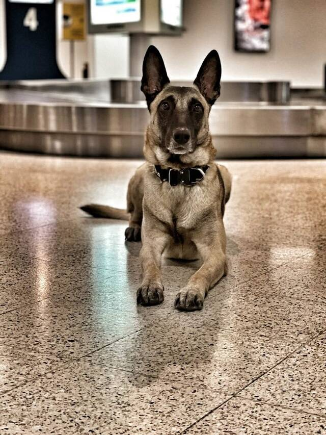 Σκύλοι – ανιχνευτές της ΑΑΔΕ σταμάτησαν παράνομες μεταφορές 170.000 ευρώ