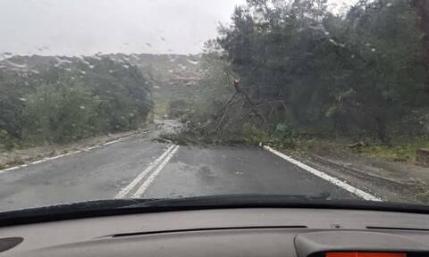 Στη δίνη των θυελλωδών ανέμων η Μυτιλήνη – Αναφορές για πτώσεις δέντρων