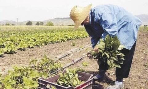 ΟΠΕΚΑ: Αναλυτικά το πρόγραμμα της Αγροτικής Εστίας για το 2021 - Πότε ξεκινούν οι αιτήσεις