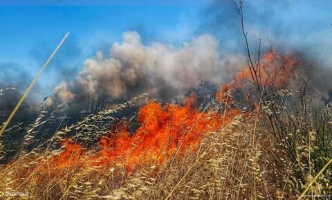Φωτιά στην περιοχή Παλούκια στη Σαλαμίνα - Υπό έλεγχο τα μέτωπα σε Ηλεία, Αλεποχώρι