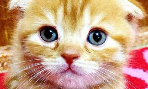 Τα γατάκια του Instagram θα σας ξετρελάνουν (pics)