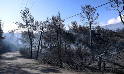 Φωτιά Γεράνεια Όρη: Στάχτη 71.000 στρέμματα - Εικόνες απόλυτης καταστροφής από drone