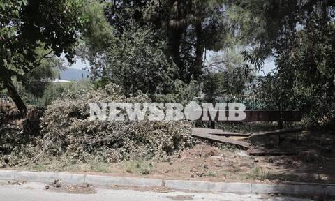 Ρεπορτάζ Newsbomb.gr στο Δήμο Κηφισιάς: Εικόνες ντροπής από τα σπασμένα κλαδιά - Τι λέει ο Δήμαρχος