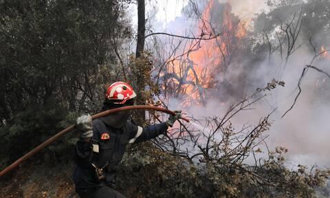 Φωτιά ΤΩΡΑ στην Κερατέα - Δήμαρχος Λαυρεωτικής στο Newsbomb.gr: Το μέτωπο είναι πάνω από σπίτια