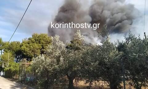 Φωτιά ΤΩΡΑ στην περιοχή Καλαμάκι Κορινθίας – Δεν υπάρχει άμεσος κίνδυνος για κατοικίες