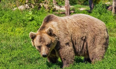 ΗΠΑ: Αρκούδα επιτέθηκε σε άνδρα μέσα στο γκαράζ του σπιτιού του