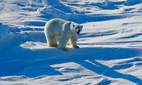ΗΠΑ: Αναστολή των αδειών για γεωτρήσεις στο αρκτικό καταφύγιο άγριας ζωής της Αλάσκας