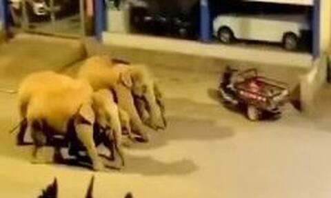 Kίνα: Αγέλη άγριων ελεφάντων έκανε ταξίδι 500 χλμ σπέρνοντας την καταστροφή