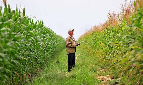 ΕΛΓΑ: Τέλος χρόνου για τις αιτήσεις θέσεων εργασίας γεωπόνων