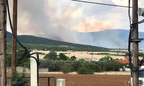 Φωτιά στη Θέρμη Θεσσαλονίκης - Μεγάλη κινητοποίηση της Πυροσβεστικής
