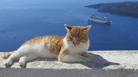 Τα ελληνικά νησιά είναι γεμάτα με γάτες! (vid)