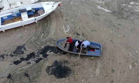 Αιγαίο πέλαγος: Κινδυνεύει από την γλίτσα που «πνίγει» τον Μαρμαρά;