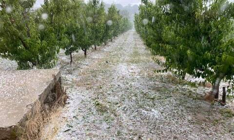 Κοζάνη: Καταστροφική χαλαζόπτωση στο Βελβεντό - Ζημιές στις καλλιέργειες ροδάκινου