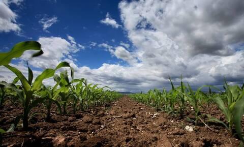 ΥΠΑΑΤ: Ψηφιακή βεβαίωση εγγραφής στο Μητρώο Αγροτών και Αγροτικών Εκμεταλλεύσεων