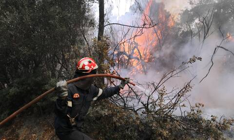 Φωτιά ΤΩΡΑ στην Σπάρτη - Επί ποδός η Πυροσβεστική