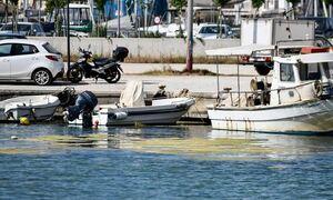 Πρέβεζα: Απόκοσμες εικόνες - «Πράσινη παλίρροια» από φύκια έπνιξε το λιμάνι (pics)