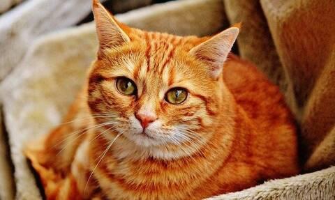 Κτηνωδία στην Εύβοια: Σκότωσε γάτα και μετά την πέταξε στα σκουπίδια