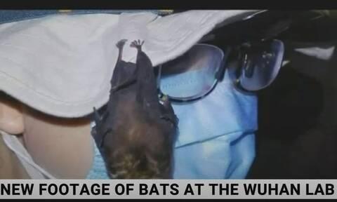 Βίντεο - αποκάλυψη του Sky News: Ζωντανές νυχτερίδες μέσα στο εργαστήριο της Γουχάν