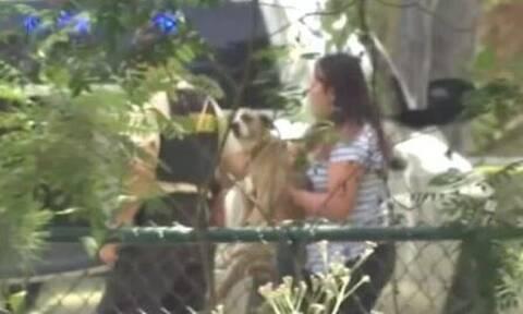 Τραγικός θάνατος για 7χρονο στις ΗΠΑ: Τον κατασπάραξαν σκυλιά ενώ έκανε βόλτα