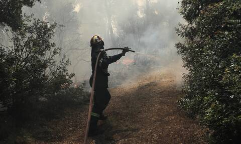 Φωτιά ΤΩΡΑ στην Αταλάντη - Επί τόπου δυνάμεις της Πυροσβεστικής