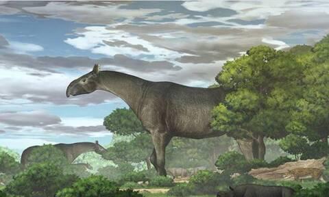 Kίνα: Ανακαλύφθηκε το μεγαλύτερο θηλαστικό της Γης - Αρχαίος ρινόκερος με μέγεθος…τεσσάρων ελεφάντων