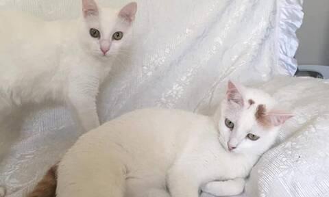 Γλυκά Νερά: Οι γάτες της Καρολάιν ψάχνουν σπίτι (photos)
