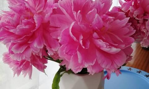Έτσι θα μείνουν φρέσκα τα λουλούδια στο βάζο