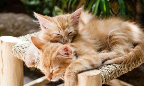 Οργή για ηλικιωμένη στη Νέα Σμύρνη: Μαχαίρωσε νεογέννητα γατάκια - Κατηγορείται για κακούργημα