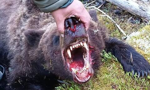 Ρωσία: Αρκούδα κατασπάραξε κατασκηνωτή