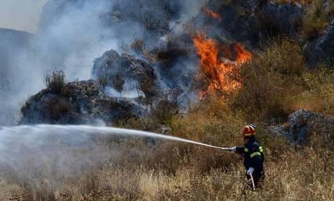 Φωτιά στο Άνυδρο Τριφυλίας